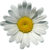 Marguerite Homepage